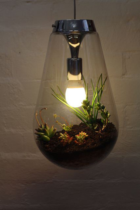 Hanging Lightbulb Plants